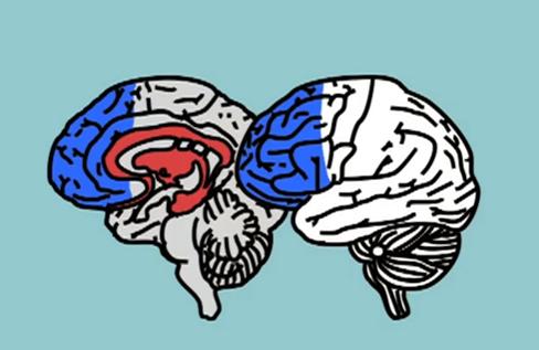 cerveau ado